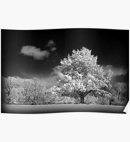 Black and White Winter Wonderland  Poster