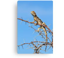 Spiny Agama - Lizard Blues of Fun Canvas Print