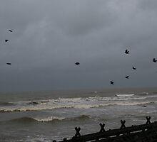 Storm Birds by joconti