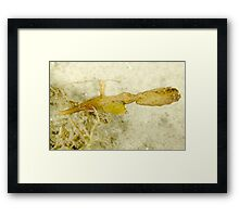 Amazing Critter - Robust Pipefish Framed Print