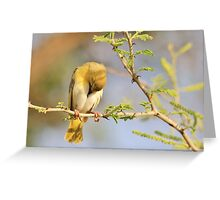 Yellow Masked Weaver - Taking a Rest Greeting Card
