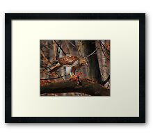 Red-Tailed Hawk with prey  Framed Print
