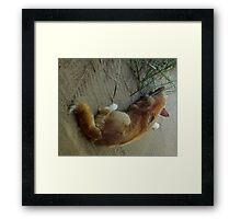 Australian Dingo Fraser Island Qld. Framed Print