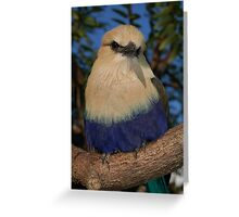 Blue Bellied Greeting Card