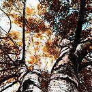 The Orange Fall by Mohammed Al-Ibrahim