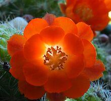 Flower macro #3 by sjames
