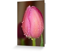 Tulips covered with droplets Greeting Card