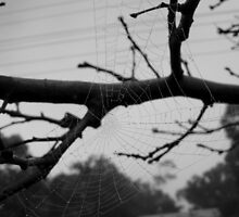 One lonely web by Crissy