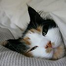 Tucked in... by HeidiD
