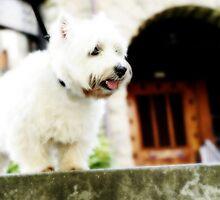 White Dog by jdflynn