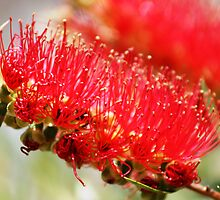 BottleBrush by Nix76