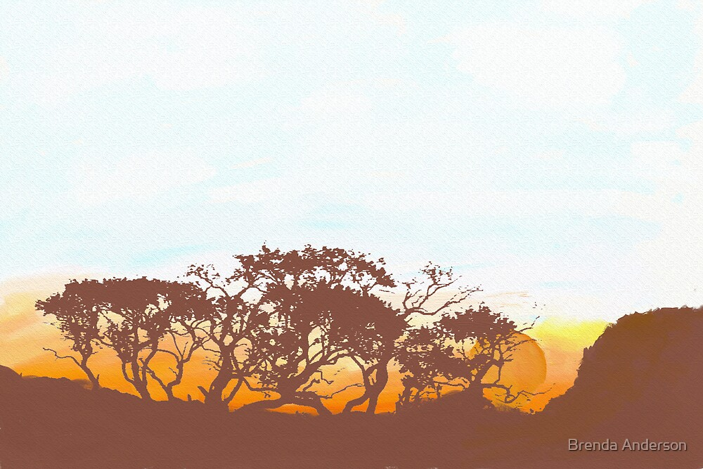 gums at sunset by Brenda Anderson