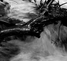 Rush by Joanna Fulton