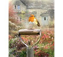 Spring Robin Photographic Print