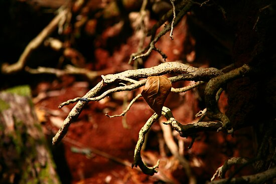 Uprooted Claws, Malanda by Erland Howden