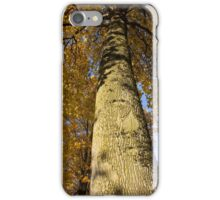 The Maples of Kensington - look up, way up iPhone Case/Skin