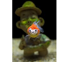 Gold Fish Nightmare Photographic Print