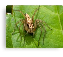 Lynx Spider Canvas Print
