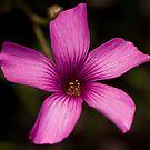 Clover flower by Ben Shaw
