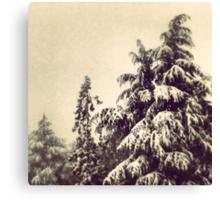 Wintery Fairyland Canvas Print