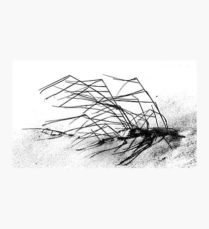 Winter Dune Grass Photographic Print