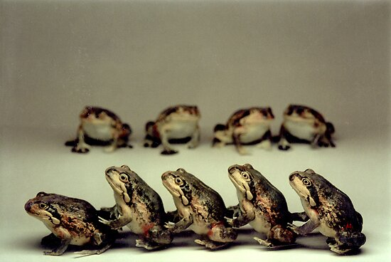 Frog conga (Scarlet-sided Pobblebonk Frog!) by John Hansen