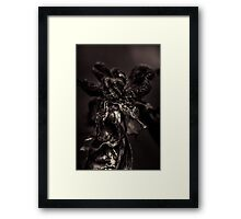 Anti-colors of decay Framed Print