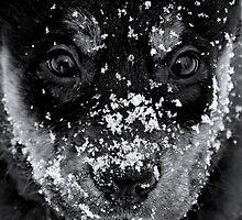 snowy day by Jessica Karran