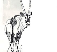 Typical of the Gemsbok by Maree  Clarkson