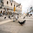 The Fast and the Pigeons II by Zeanana