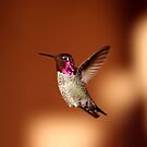 Hummer Flight by Daniel J. McCauley IV