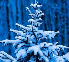 Snow covered Christmas tree by luckypixel