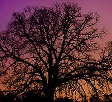 Purple Sunset Magic by blutat2