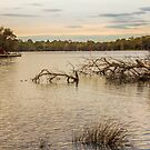 Swan River from The Esplanade, Ascot, Perth, W.A. by Elaine Teague