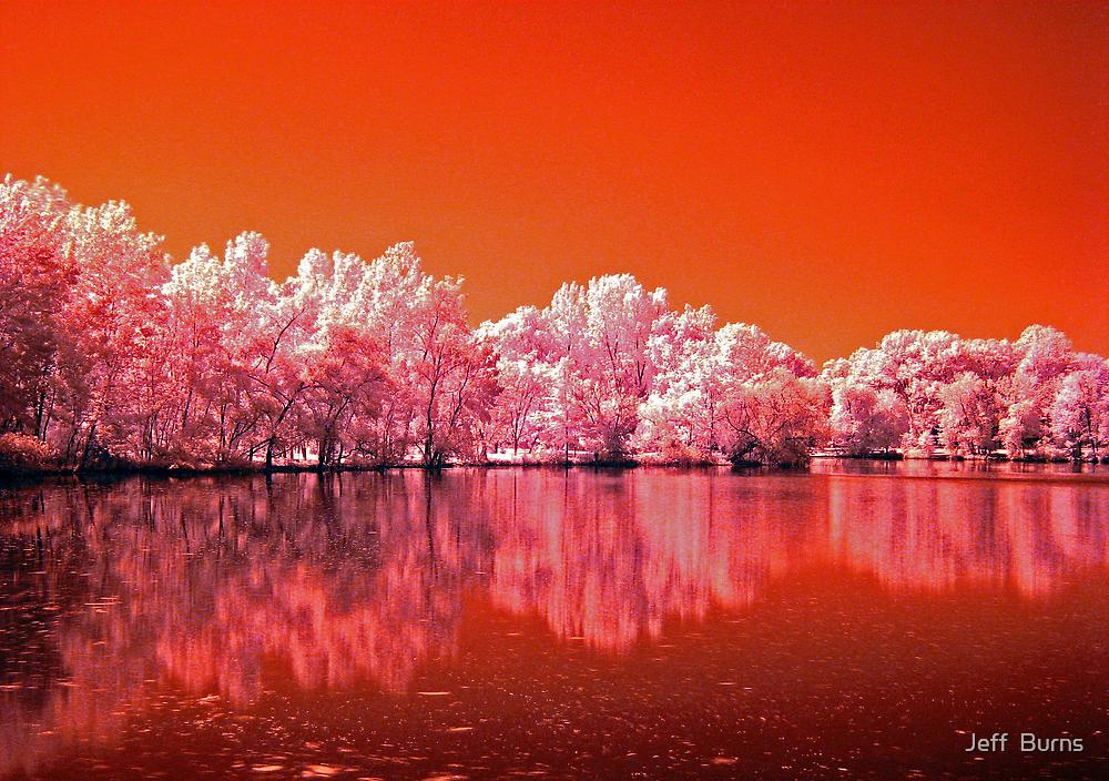 Tree's On Mars by Jeff  Burns