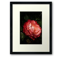 A Gift From My Mother's Garden - Chiaroscuro Rose Framed Print