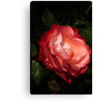 A Gift From My Mother's Garden - Chiaroscuro Rose Canvas Print