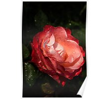 A Gift From My Mother's Garden - Chiaroscuro Rose Poster