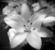 White lily flower by GemaIbarra