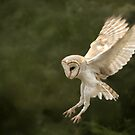Flight of the Barn Owl by Graham Jones