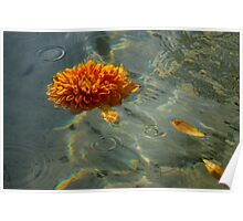 Liquid Rainbows – Floating Chrysanthemum Blossom in the Sunshine Poster