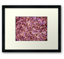 The Great Silicone Rush Framed Print