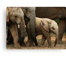 The Baby Of The Herd Canvas Print