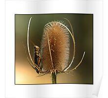Grasshopper Repose Poster