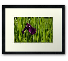 Sunny Green and Purple Summer Framed Print