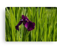 Sunny Green and Purple Summer Canvas Print