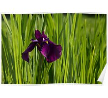 Sunny Green and Purple Summer Poster