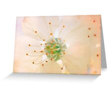 White Cherry Macro Photography - Vintage Effect Greeting Card