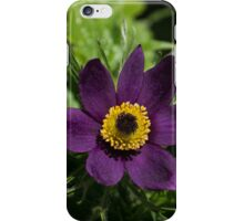 Deep Purple Easter Anemone Blossom iPhone Case/Skin