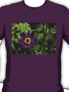 Deep Purple Easter Anemone Blossom T-Shirt